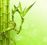 зеленый цвет бамбука предпосылки Стоковые Изображения RF