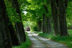 зеленый цвет бульвара Стоковая Фотография