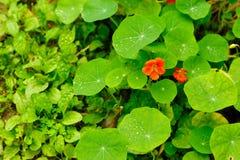 Зеленый цвет весны Стоковое Изображение RF