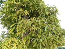 зеленый цвет ветвей выходит saplings вал Стоковые Фото