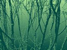 зеленый цвет ветвей Стоковая Фотография RF