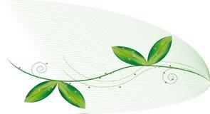 зеленый цвет ветви бесплатная иллюстрация