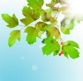 зеленый цвет ветви Стоковое Изображение