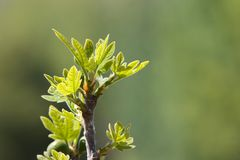 зеленый цвет ветви Стоковое Изображение RF