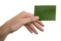 зеленый цвет визитной карточки Стоковые Фото
