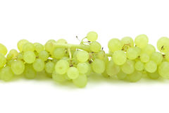 зеленый цвет виноградин ветви Стоковые Фото