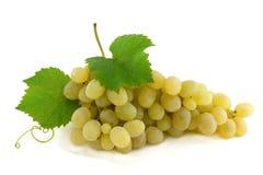 зеленый цвет виноградин группы зрелый Стоковые Фотографии RF
