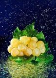 зеленый цвет виноградин пука выходит белизна Стоковое фото RF