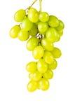 зеленый цвет виноградин пука Стоковые Изображения