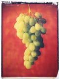 зеленый цвет виноградин иллюстрация вектора