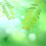 Зеленый цвет выходит букет на blury зеленый цвет Стоковое Фото