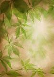 зеленый цвет выходит бумажный сбор винограда Стоковые Изображения RF