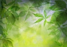 зеленый цвет выходит бумажный сбор винограда Стоковые Фотографии RF