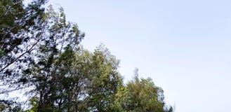 Зеленый цвет выходит ветвь и ясность голубое небо с космосом экземпляра стоковые изображения