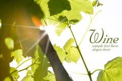 зеленый цвет выходит вино Стоковое Изображение RF