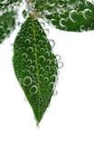 зеленый цвет выходит вода Стоковые Изображения