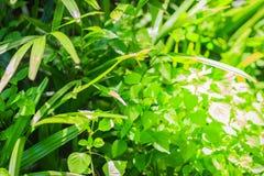 Зеленый цвет выходит в задворк с сильным контрастом тени и высокий Стоковая Фотография