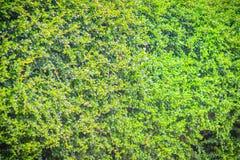 Зеленый цвет выходит в задворк с сильным контрастом тени и высокий Стоковое Изображение