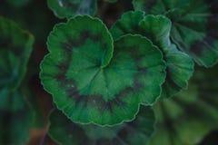 Зеленый цвет выходит заводы растя в ботанический сад Стоковая Фотография RF