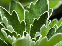 зеленый цвет выходит завод Стоковое Изображение