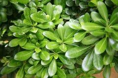 зеленый цвет выходит завод стоковые фото