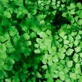 зеленый цвет выходит картина против предпосылки голубые облака field wispy неба природы зеленого цвета травы белое Стоковые Фото
