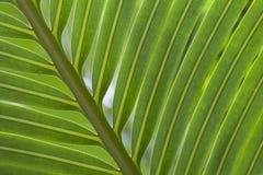 зеленый цвет выходит ладонь Стоковое Изображение