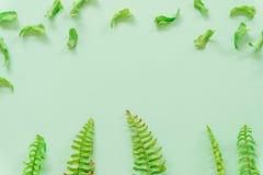 Зеленый цвет выходит минимальный на зеленую предпосылку стоковые фотографии rf