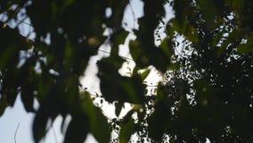 Зеленый цвет выходит на дерево с солнечностью акции видеоматериалы