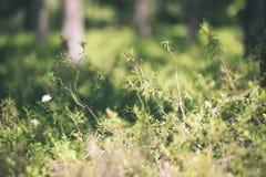 зеленый цвет выходит на кровать зеленого куста - винтажного влияния фильма Стоковое Изображение