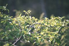 зеленый цвет выходит на кровать зеленого куста - винтажного влияния фильма Стоковая Фотография