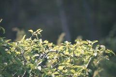 зеленый цвет выходит на кровать зеленого куста - винтажного влияния фильма Стоковое фото RF