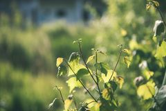 зеленый цвет выходит на кровать зеленого куста - винтажного влияния фильма Стоковая Фотография RF