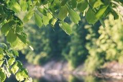 зеленый цвет выходит на кровать зеленого куста - винтажного влияния фильма Стоковые Фото
