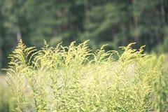 зеленый цвет выходит на кровать зеленого куста - винтажного влияния фильма Стоковые Изображения