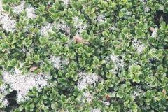 зеленый цвет выходит на кровать зеленого куста - винтажного влияния фильма Стоковые Фотографии RF