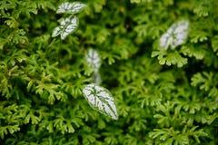 Зеленый цвет выходит обои естественной предпосылки, текстура лист, листьев с космосом для текста стоковое изображение rf