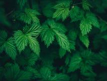 Зеленый цвет выходит предпосылка в темные тоны Стоковое Фото