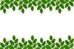 Зеленый цвет выходит предпосылка стоковое фото