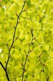 Зеленый цвет выходит предпосылка Стоковое Изображение RF