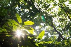 зеленый цвет выходит солнечность Стоковое Фото