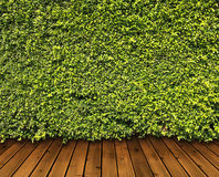 Зеленый цвет выходит стена Стоковые Фотографии RF