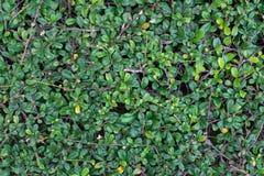 Зеленый цвет выходит текстура для предпосылки стоковая фотография