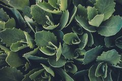 Зеленый цвет выходит текстура Стоковая Фотография RF