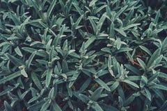 Зеленый цвет выходит текстура Стоковое Фото