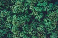 Зеленый цвет выходит текстура Стоковое Изображение