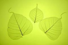 зеленый цвет выходит текстура Стоковые Изображения RF