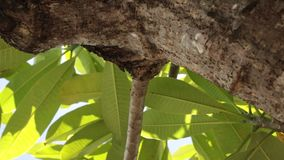 зеленый цвет выходит тропической Солнечный день на тропическом острове Бали, Индонезия акции видеоматериалы