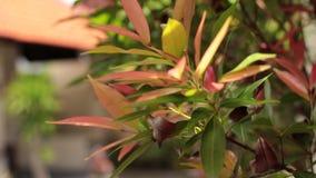 зеленый цвет выходит тропической Солнечный день на тропическом острове Бали, Индонезия сток-видео