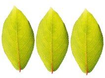 зеленый цвет выходит 3 стоковая фотография rf